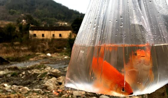 """塑料:扼住地球呼吸的""""白色污染"""",何去何从"""