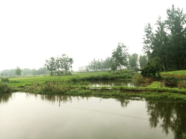 江苏省滨海县天场镇河长办扎实开展巡河工作